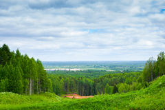 summer forest landscape Stock Photos