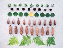 Summer forest leaves and cones collection royalty free stock photos