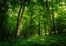 Summer forest with light shining through foliage. On plants below royalty free stock image