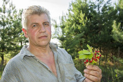 In the summer in the forest, a man holds a bouquet of strawberri. In summer, in the forest, a man holds a bouquet of ripe strawberries in his hand Stock Photos