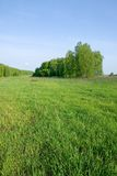 Summer forest and meadow Royalty Free Stock Image