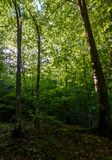 Summer forest in the morning. Beautiful nature background Royalty Free Stock Photo
