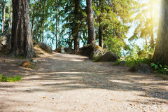Summer forest mountain path at sunset Royalty Free Stock Image