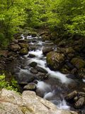 Summer forest mountain stream. Summer forest landscape with mountain waterfall stream Royalty Free Stock Photo