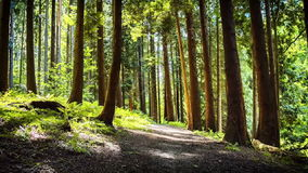Summer forest with narrow path. Slider shot stock video