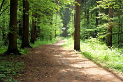 Summer Forest Path Stock Photography