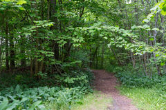 Summer forest and path Royalty Free Stock Images