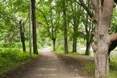Summer forest and path Royalty Free Stock Image