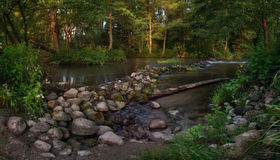 Summer Forest River Lake Royalty Free Stock Photos