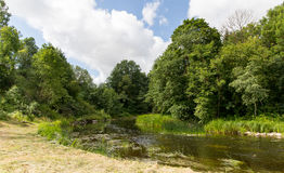Summer forest and river Stock Image