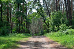 Summer forest road Royalty Free Stock Photos