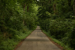 Summer forest road Stock Image
