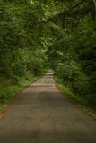 Summer forest road Royalty Free Stock Image