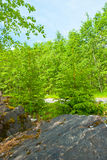 Summer forest at Ruskeala Stock Images