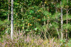 Summer forest scenery selective focus. On sunny day Royalty Free Stock Photography