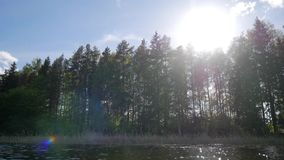 Summer forest silhouette. Sun flare. View from the lake. HD slowmotion stock video