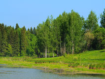 Summer forest with small lake under clear blue sky. Summer forest landscape with small lake under clear blue sky Stock Photography