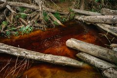 Summer forest stream. Rusty water. Wood in the water royalty free stock photos