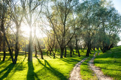 Summer forest with sun and dirt road Royalty Free Stock Photo