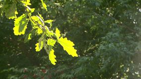 Summer forest on a sunny day. In the summer stock video footage