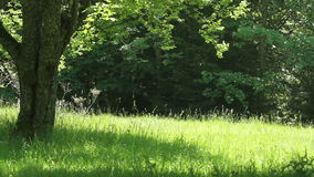 Summer forest in sunny day stock video footage