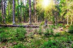 Summer forest Stock Photos