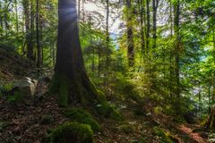 Sunset in the forest. Summer in the forest before sunset royalty free stock photos