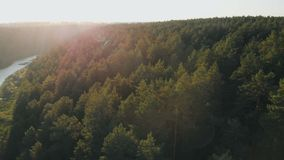Summer Forest Trees Woods at sunset Sun Shining Through Trees Nature Beauty Aerial Close Up New Beginning Afterlife. Drone Shot Summer Forest Trees Woods at stock footage