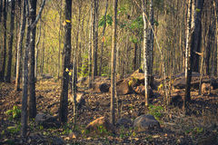 Summer forest Royalty Free Stock Photography