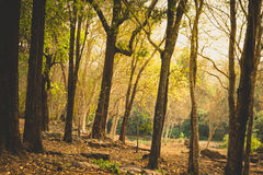 Summer forest Stock Images