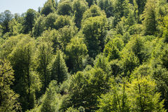 Summer forest under the sun Royalty Free Stock Photos