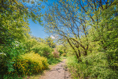 Summer Forest Woods, Lane, Path, Pathway Stock Image