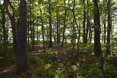 Summer forrest. Forrest in the summer. Lake in background royalty free stock photos