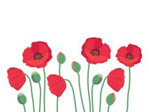 Summer frame border with cute colorful red field poppy flowers i. Solated on white background ,vector seasonal illustration Royalty Free Stock Images