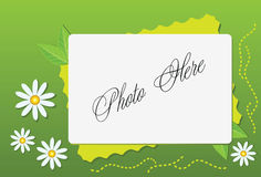 Summer frame with camomile Royalty Free Stock Photography