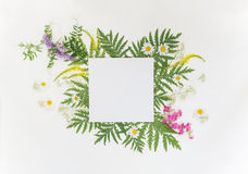 Summer frame with different herbs and flowers Royalty Free Stock Photo