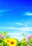 Summer frame Stock Images