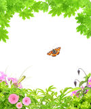 Summer frame with green maple leaves, flowers and insects Stock Photography