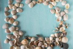 Summer frame with seashells Royalty Free Stock Image