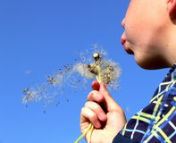 Summer freedom. Young boy blowing summer flower Stock Photography