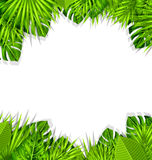 Summer Fresh Background with Tropical Leaves Royalty Free Stock Images