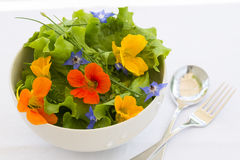 Summer fresh flowers salad in bowl. Green salad lettuce with colored flowers royalty free stock image
