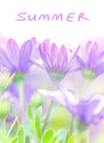 Summer fresh flowers Royalty Free Stock Images
