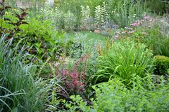 Summer fresh garden with borders fool of nice plants. Borders with a variety of ornamental shrubs perennials and grasses stock image