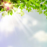 Summer fresh green leaves Royalty Free Stock Photo