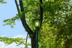 Summer fresh green leaves and street light Stock Photos