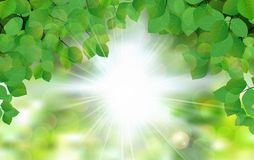 Summer fresh leaf green leaves with sun rays Royalty Free Stock Photos