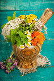 Summer fresh medicinal herbs on the wooden background. royalty free stock images