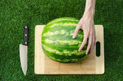 Summer and fresh watermelon topic: human hand with a knife beginning to cut a watermelon on the grass on a cutting board Stock Photo
