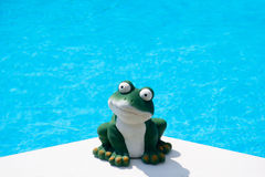 Summer frog Stock Images